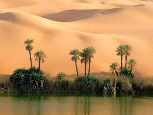 Растительность пустыни