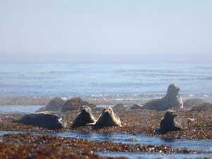 Джут - мор диких копытных животных и домашнего скота