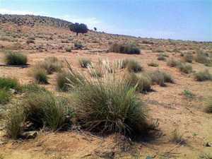 Пустынные растения